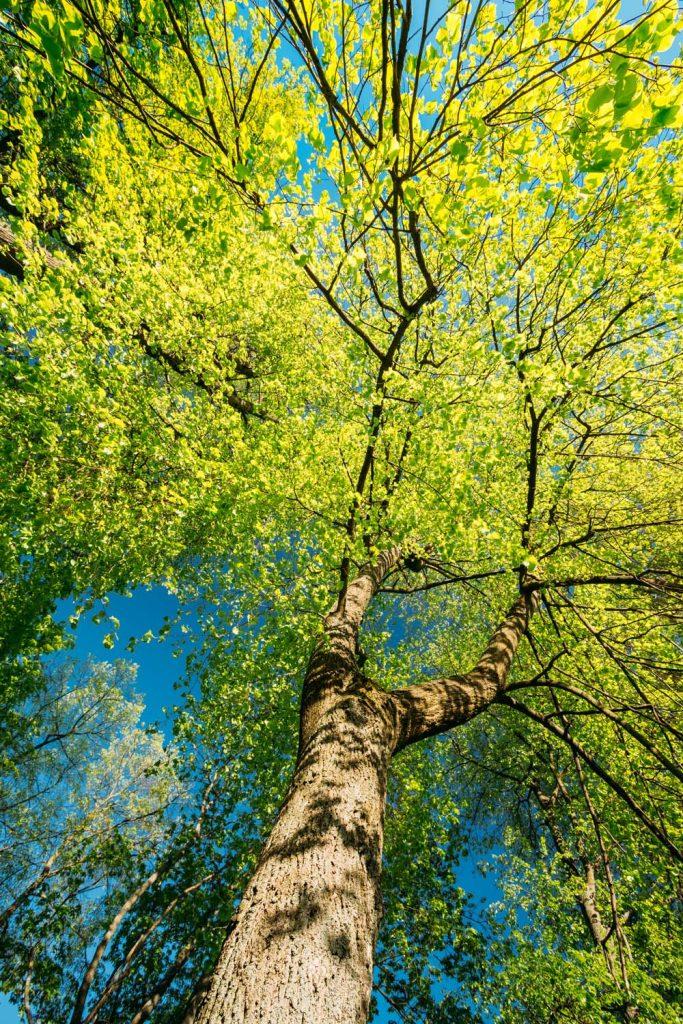 Baum im Wald - Bund Naturschutz Spende